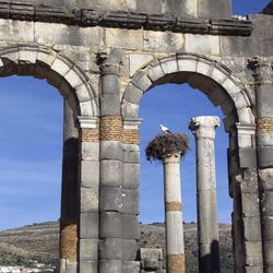 In this Thursday, March 8, 2012 photo, a stork nests on top of a pillar seen through the arches of the Basilica, the main administrative building of Volubilis, Morocco's premier Roman ruin near Meknes, Morocco.