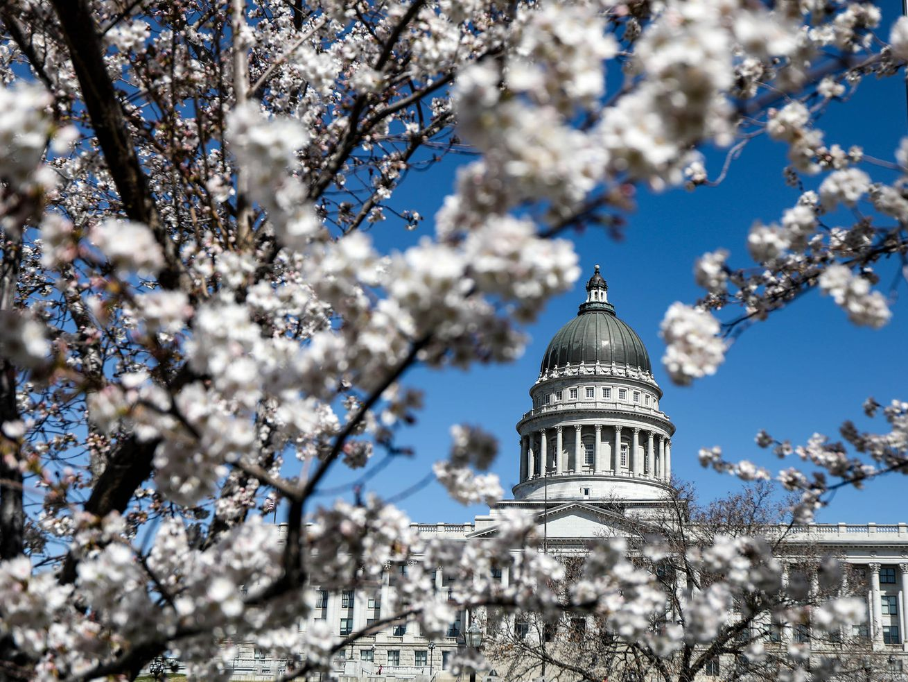 Cherry blossoms frame the Capitol in Salt Lake City on Monday, April 4, 2021.
