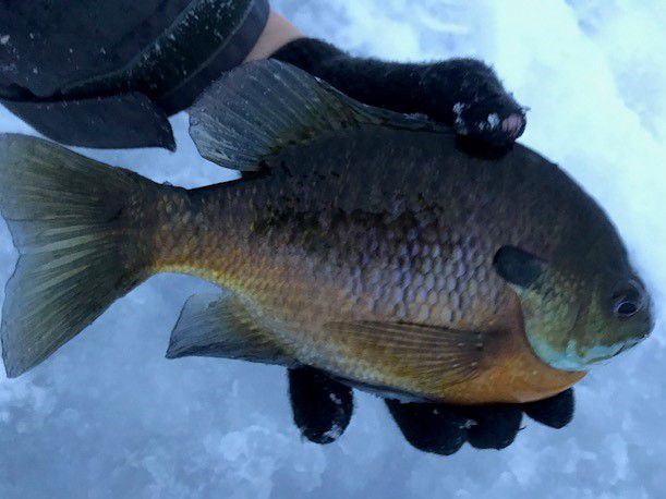 This sprawling raw-file Midwest Fishing Report spans the great divide between fishing before Chicago's big snow and how it is now.
