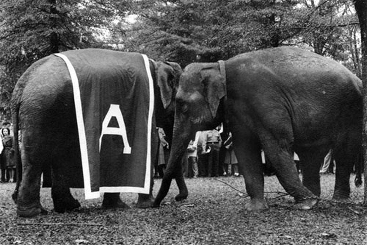 Alabamas Homecoming Elephants Roll Bama Roll