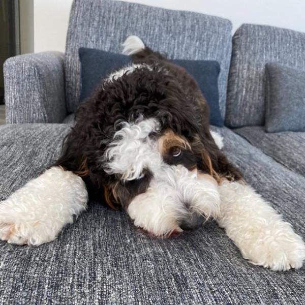 Christian Yelich's dog Cooper