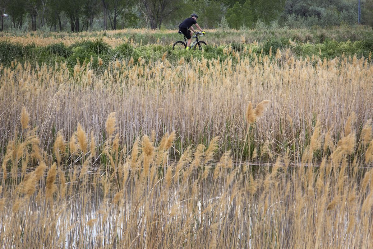FILE - A cyclist makes his way along the Jordan River Trail on Saturday, May 5, 2018, in West Valley City. The Get Into the River Festival — a monthlong series of community events centered on the Jordan River and Jordan River Parkway — will take place dur