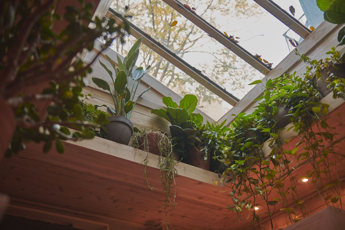 Green plants hang down from a skylight above the open kitchen