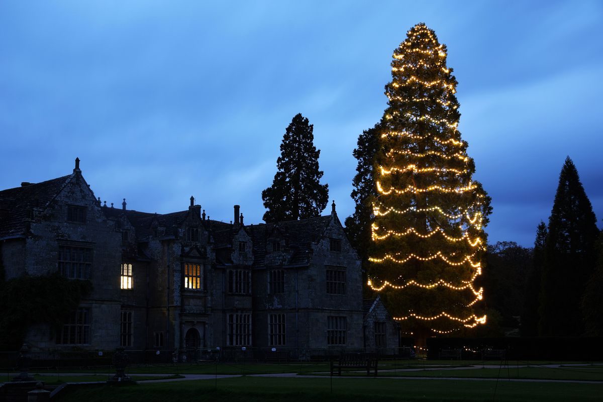 Britain's Biggest Christmas Tree Is Decorated For The Festive Season