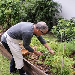 The backyard has two gardens that grows everything from herbs to lettuces to tomatoes.