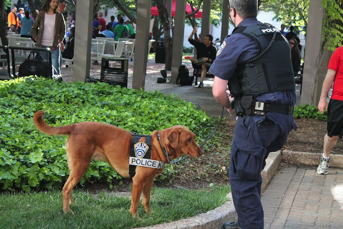 how to get a police trained dog