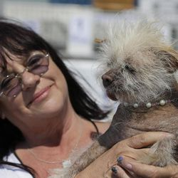 Linda Elmquist, of Tucson, Ariz., holds up Josie, her Chinese crested mix, before the start of the World's Ugliest Dog Contest at the Sonoma-Marin Fair Friday, June 23, 2017, in Petaluma, Calif.