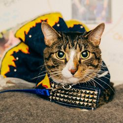 """<strong>Model:</strong> Cody<br> <strong>Broadway Inspiration:</strong> Rock of Ages<br> <strong>Shame Level:</strong> Moderate.<br><br>  """"I was told there would be treats."""""""