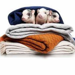 NM Exclusive cashmere throws, $595