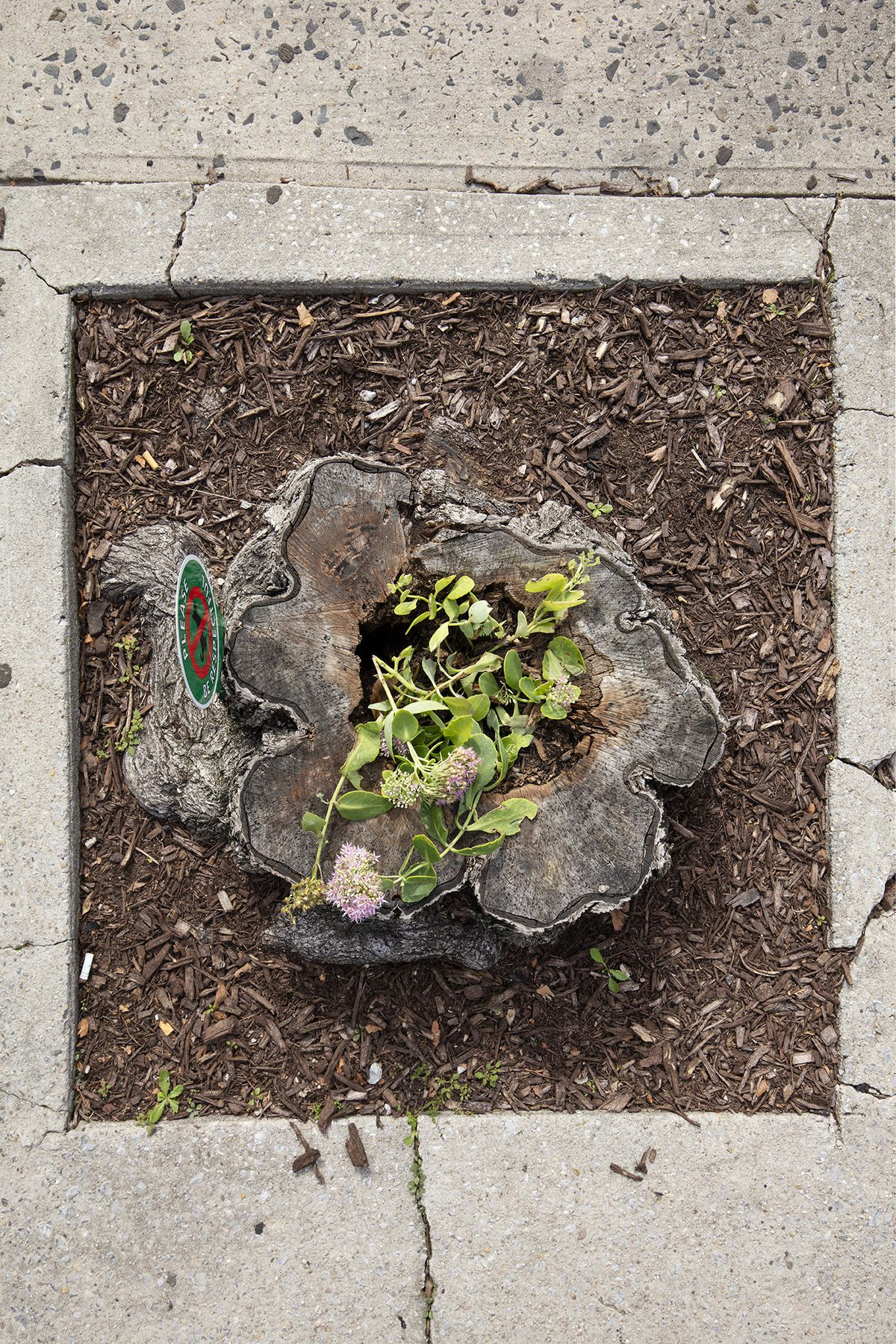 A tree stump with flowers planted in it.