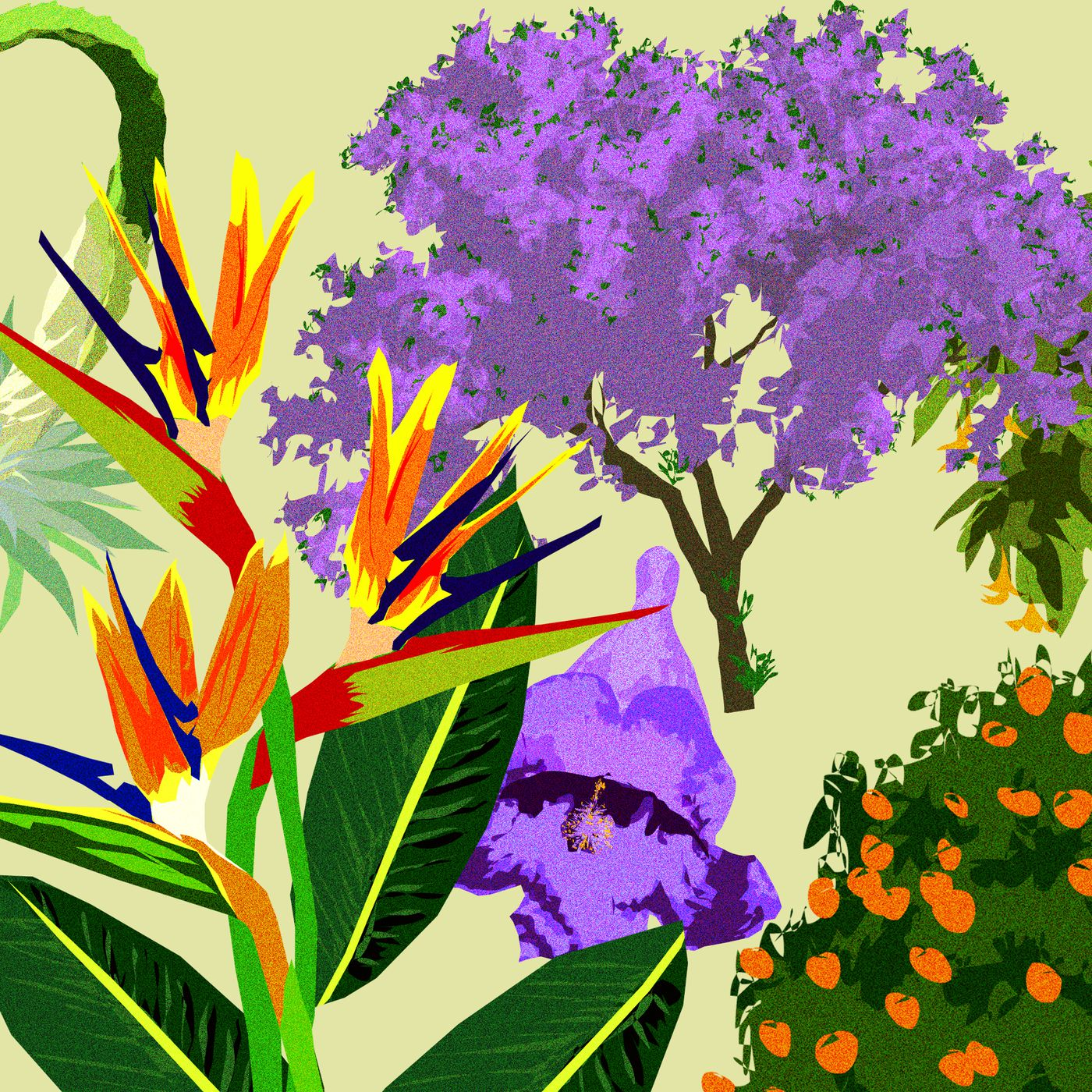Los Angeles trees and flowers: An illustrated guide - Curbed LA