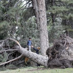Cylis DeLuna, right, helps his second cousin, Joshua Wheeler, off of a tree that was felled by high winds in Liberty Park in Salt Lake City on Tuesday, Sept. 8, 2020.