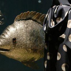 Here, fishy fishy.