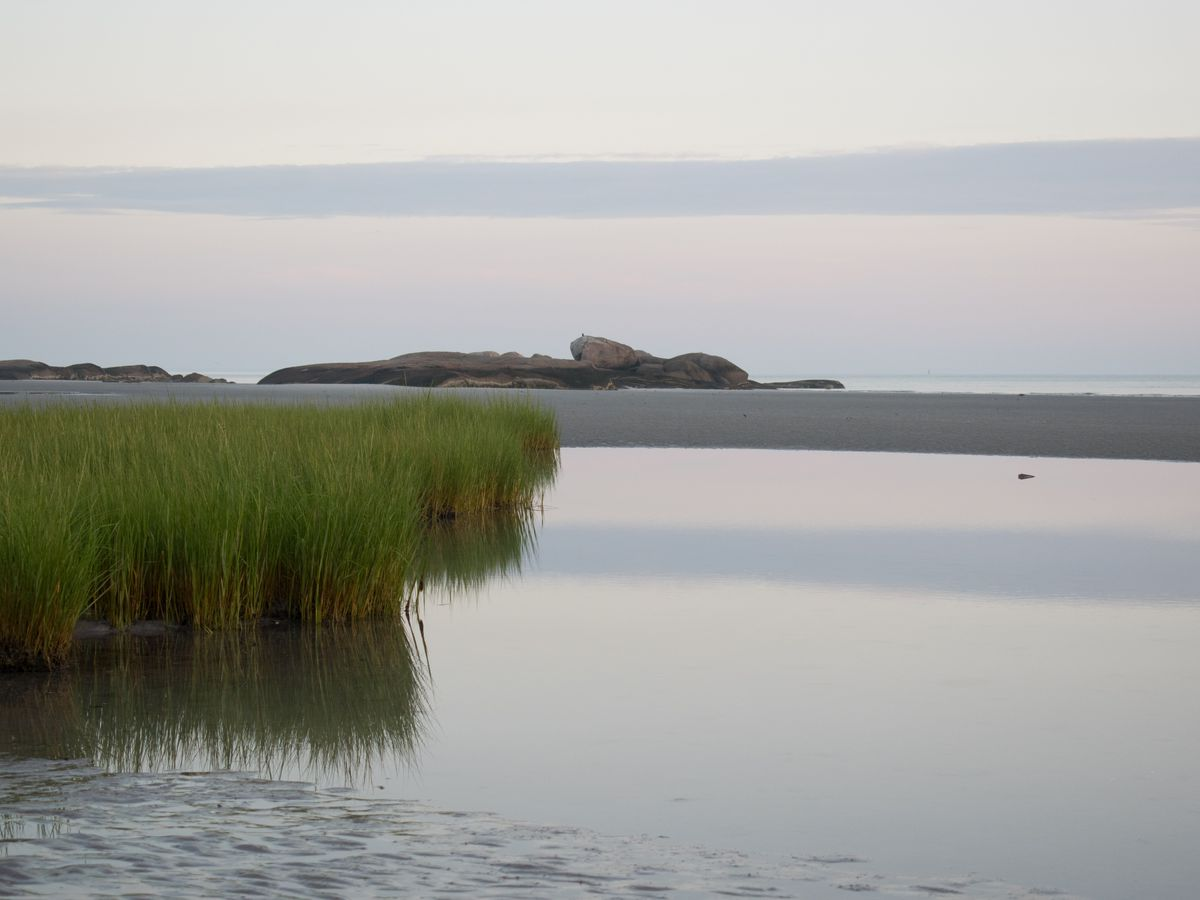 A sandy beach, tall grass, and a body of water.