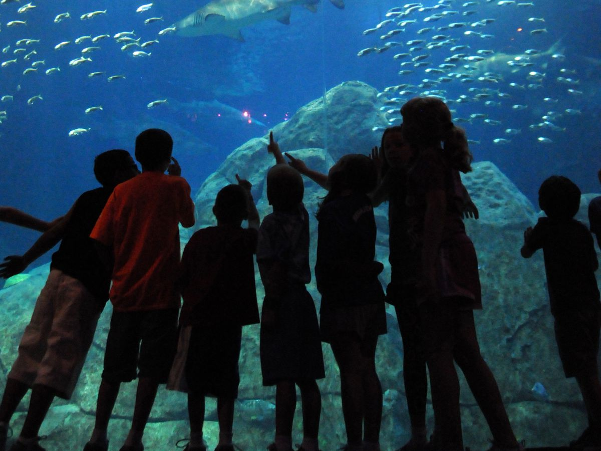 Children and adults stand in front of the glass at the Adventure Aquarium in Camden, New Jersey. There are various sea creatures swimming in water behind the glass.