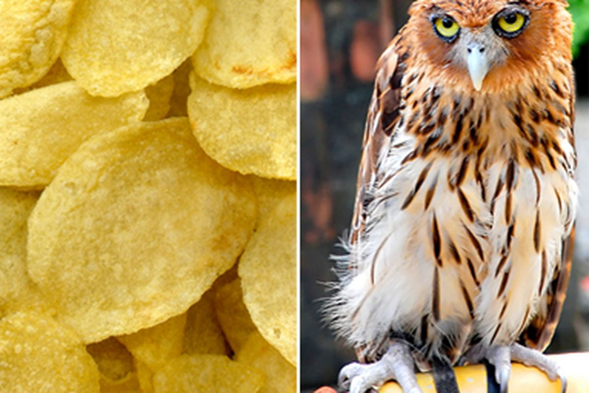 Chips and Owls. As you can tell from both their faces, they do NOT like each other.