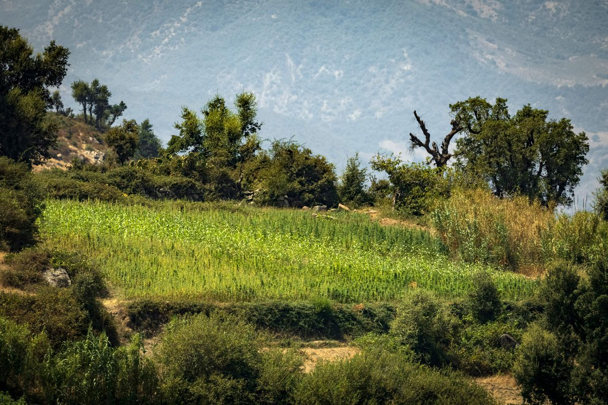 MOROCCO-CABNNABIS-AGRICULTURE