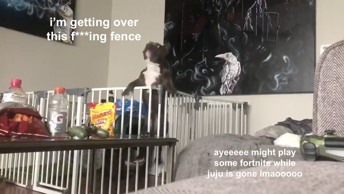0554382ded0 JuJu Smith-Schuster's dog Boujee escapes out of his cage with elite  athleticism and grit