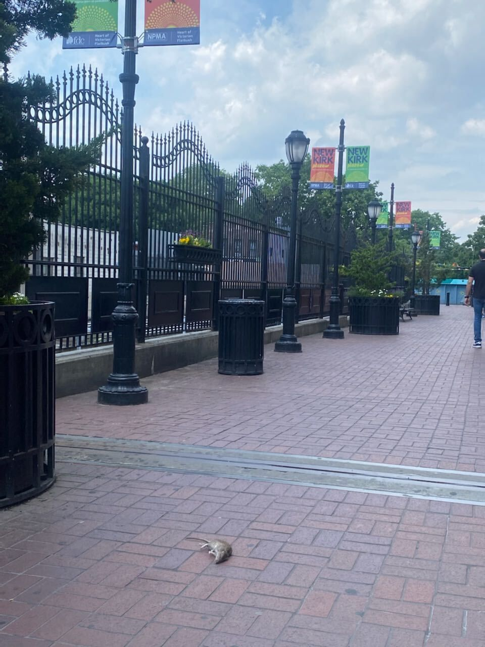 The owner of Almac Hardware, a longtime Newkirk Plaza business, took this photo of a dead rat in the middle of the pedestrian area next to the subway station.