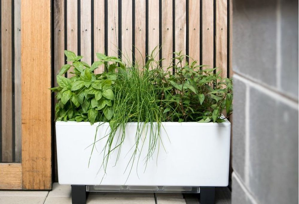 Urban Gardening Ideas Tips And Products For Small Spaces Curbed,Brown Shades Chocolate Brown Hair Color 2020