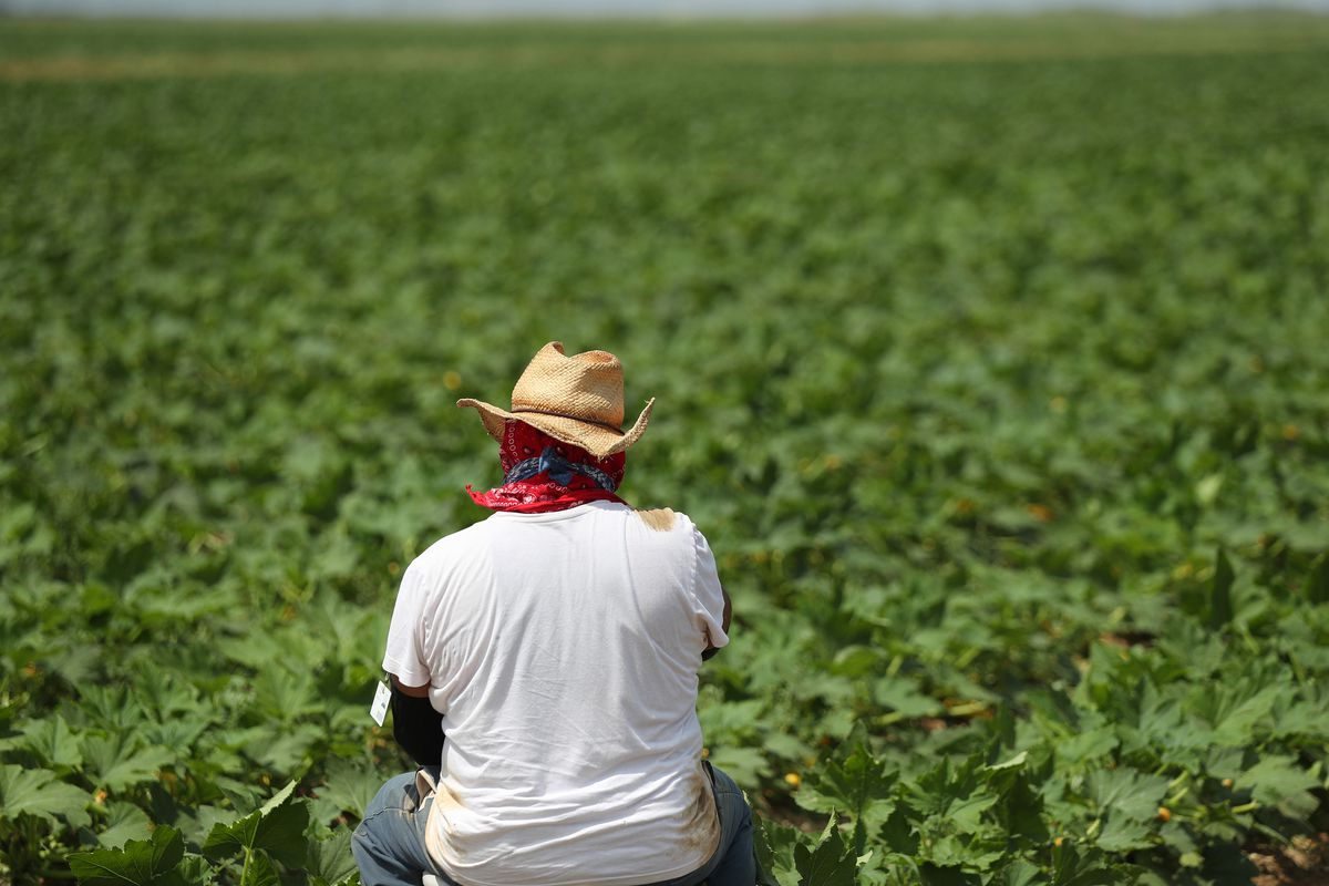 Essential Farm Workers Continue Work As Florida Agriculture Industry Struggles During Coronavirus Pandemic