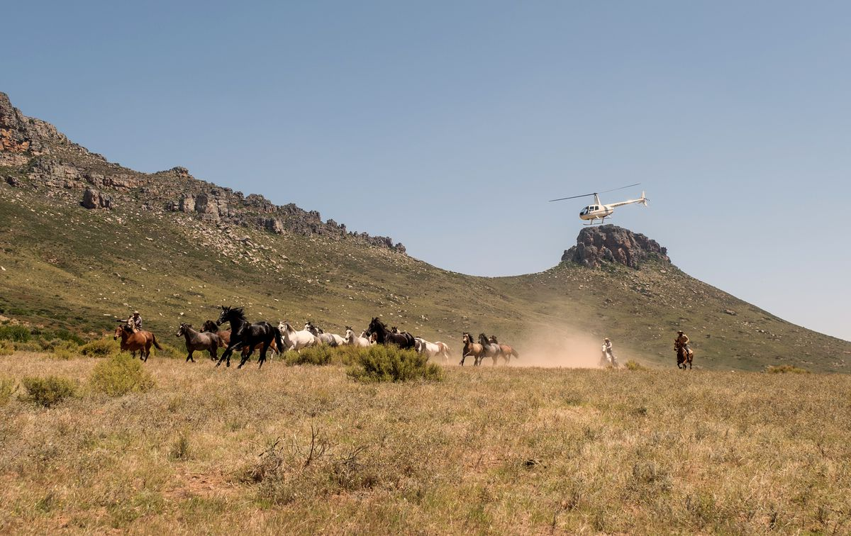 A herd of mustangs gallops across the scrubby ground, pursued by a helicopter.