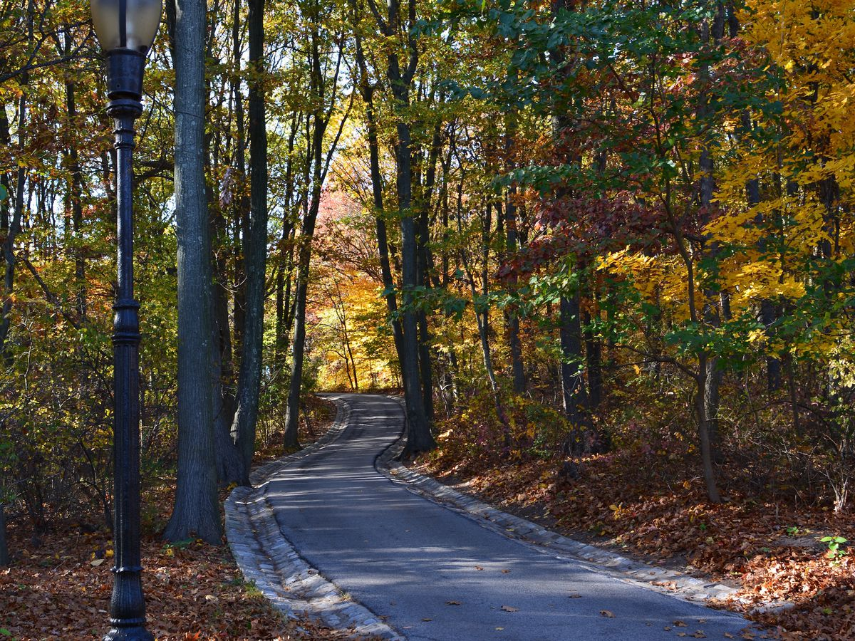 A path through Clove Lakes Park in the autumn. There are trees on both sides of the path. The trees have multicolored leaves.