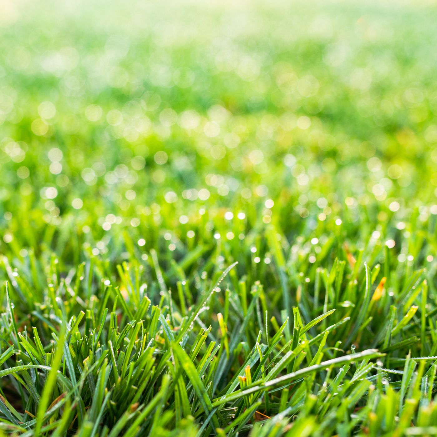 Fescue Grass 101 What It Is And How To Grow It This Old House