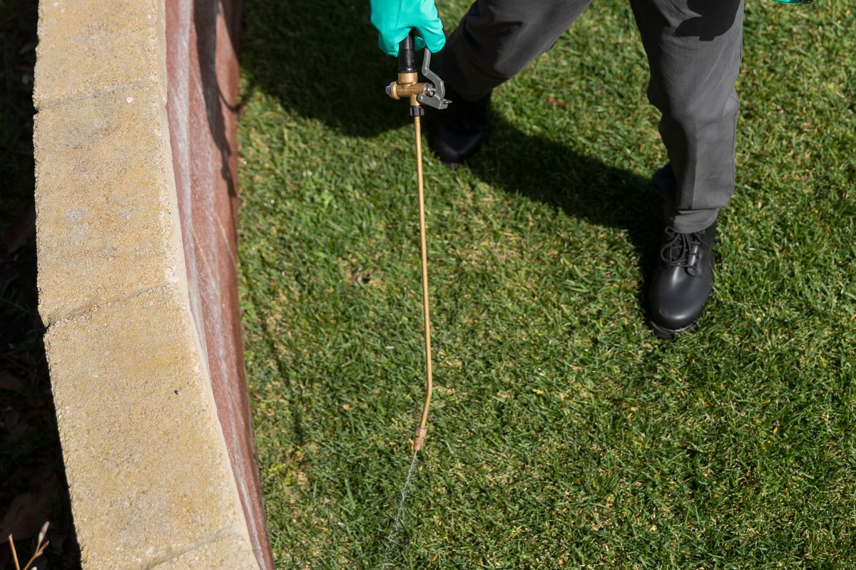 A pest control specialist wearing a green shirt and black pants walks the perimeter of a green backyard spraying pest control solution with a gold wand alongside a red brick wall.