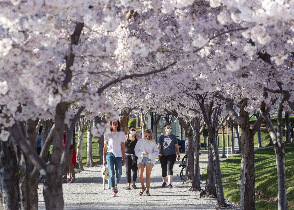 People enjoy the 433 Yoshino cherry trees that line the .7 mile Memorial Walkway around the Capitol in Salt Lake City on Thursday, April 9, 2020.