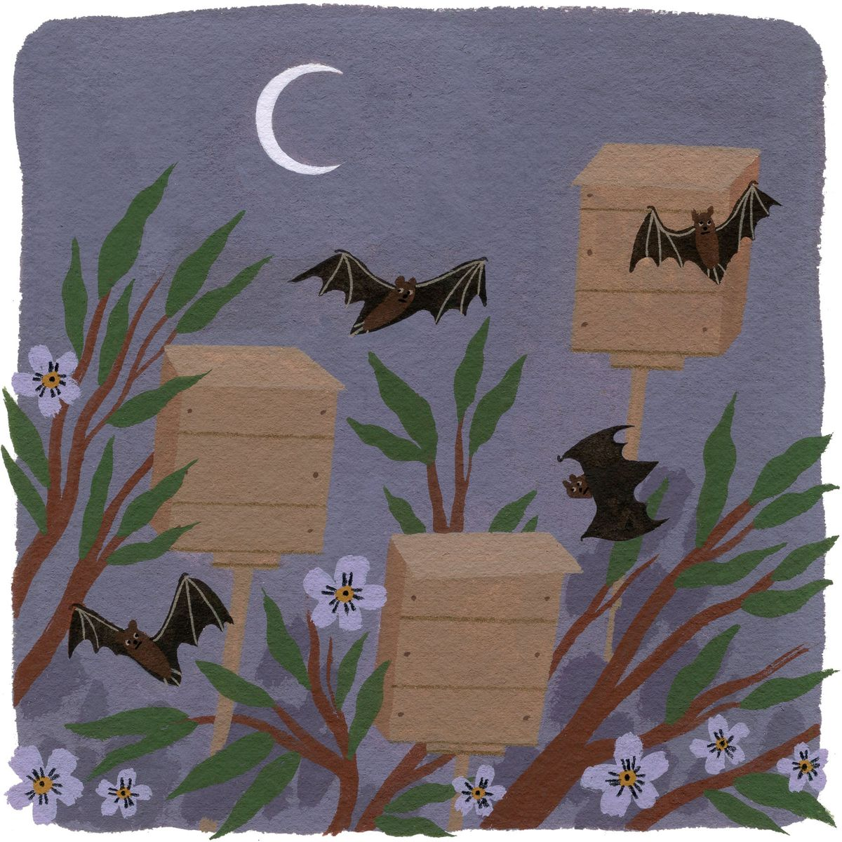 A crescent moon shines in the sky as a group of four bats fly around bat boxes nestled in a blooming tree. Illustration.