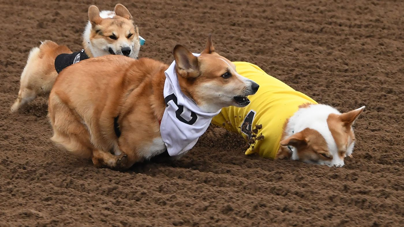 Behold, The Wonder That Is CORGI RACING