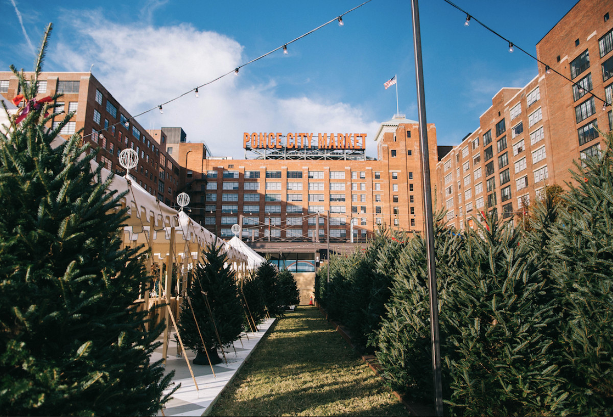 Rows of pine trees in a courtyard surrounded by various city buildings.