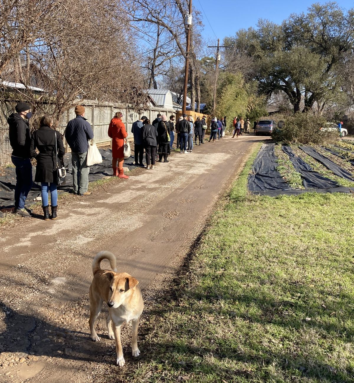 Long line of people with a dog observing