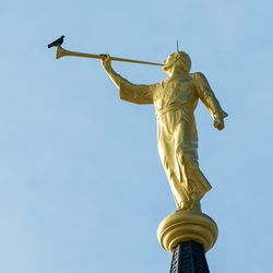 A pigeon rests on the trumpet of the Angel Moroni statue atop the Provo City Temple, Monday, Jan. 11, 2016.