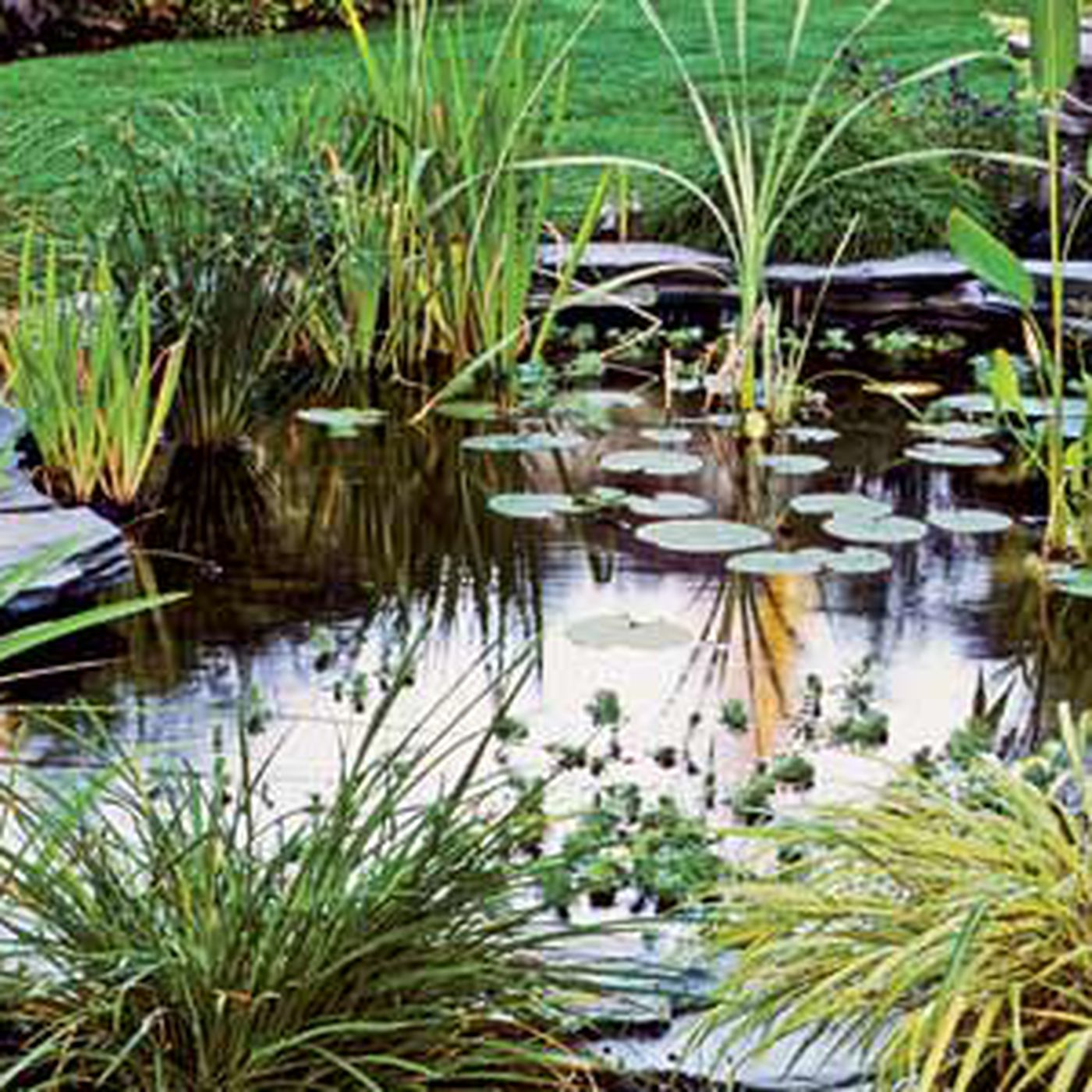 5-Spot Lights For Pond Fountain Garden In//Out Water Use