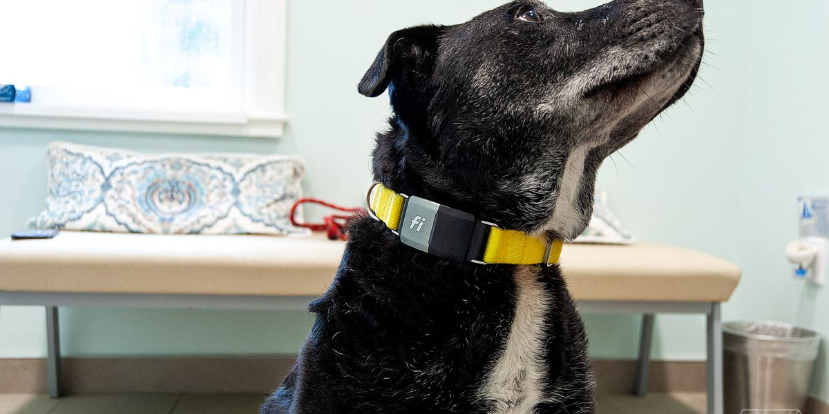 Fi dog collar review: some interesting ideas, but leaves a lot to be desired - The Verge