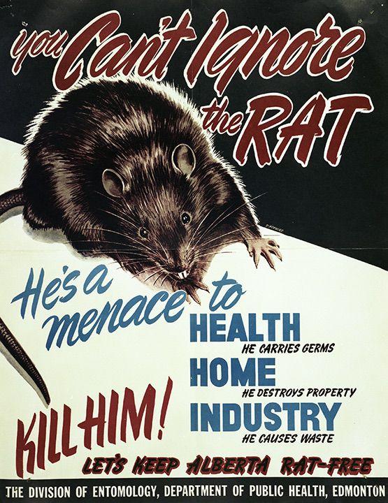 Color rat poster