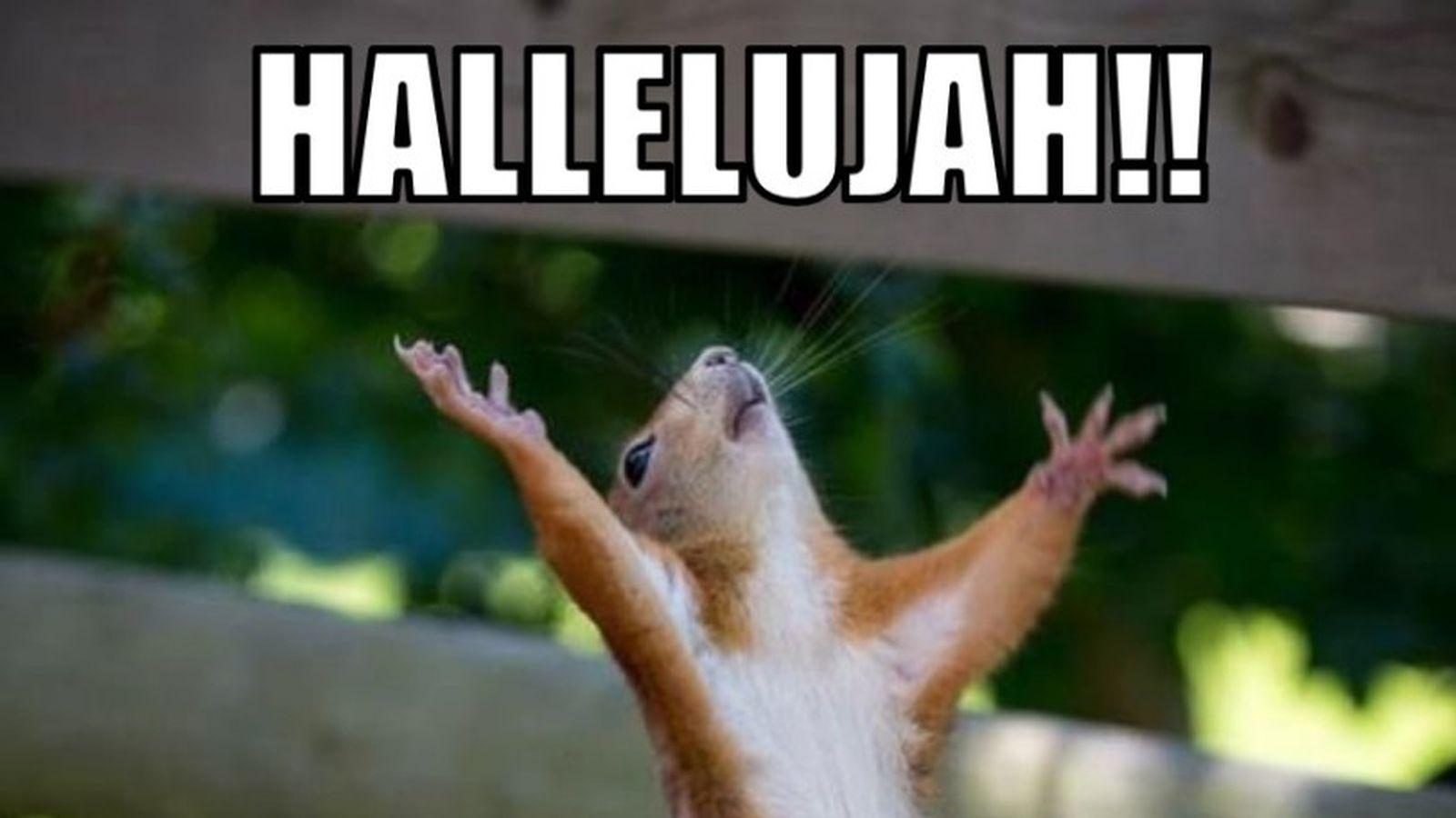 Kentucky Wildcats Quickies: TGIF - A Sea Of Blue Hallelujah Meme