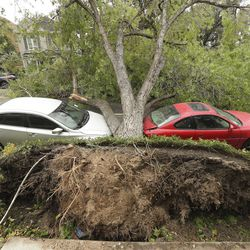 A large tree rests on two cars in the Avenues in Salt Lake City after it was toppled by high winds on Tuesday, Sept. 8, 2020.