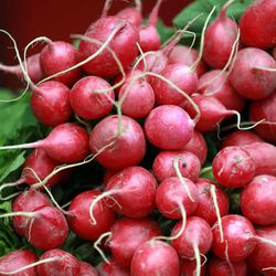 Radishes for sale at the Downtown Farmers Market at Pioneer Park in Salt Lake City on Saturday, June 14, 2014.