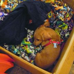 Callalilai carries tops, scarves, and dresses in all these lovely prints (sleeping puppy not included.)