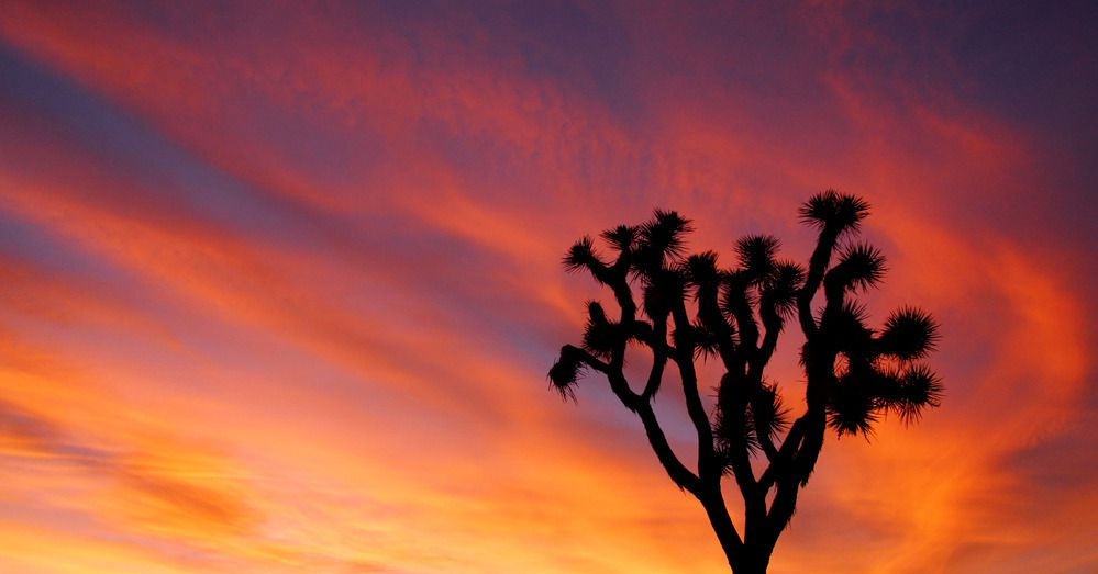 Where To Drink and Dine Near Joshua Tree National Park