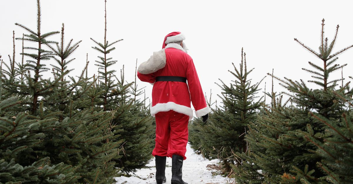What's the most environmentally friendly Christmas tree you can get?