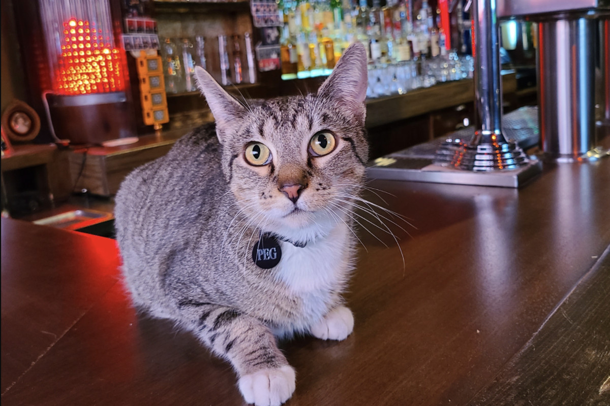 """A tabby cat with yellow eyes and a collar tag that reads """"Peg"""" sits atop a wooden bar."""