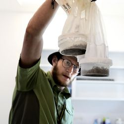 Biologist Christian Weinrich removes mosquitoes from a freezer at the Salt Lake Mosquito Abatement District laboratory in Salt Lake City on Thursday, May 27, 2021.