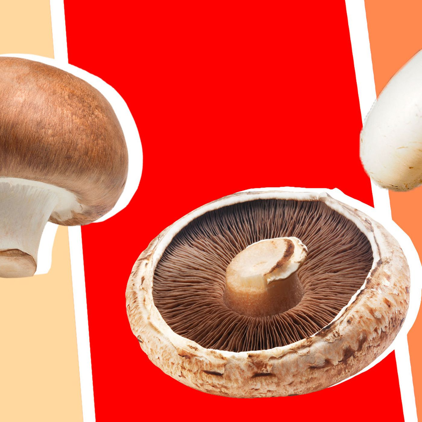 The Difference Between Cremini Button And Portobello Mushrooms Eater