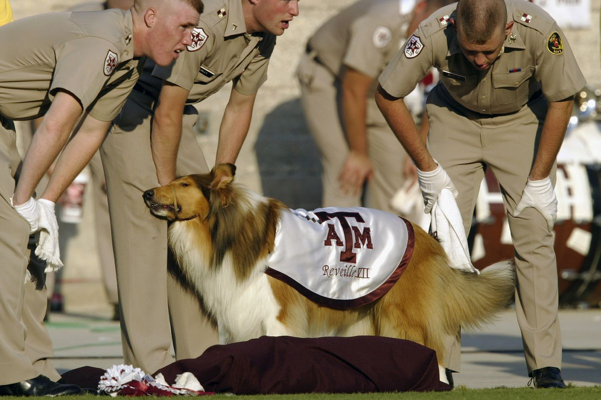 """<p zoompage-fontsize=""""15"""" style="""""""">Members of the Army stands with a dog"""