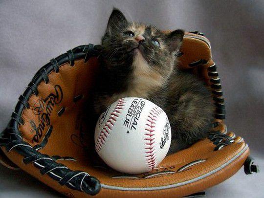 baseballkitten