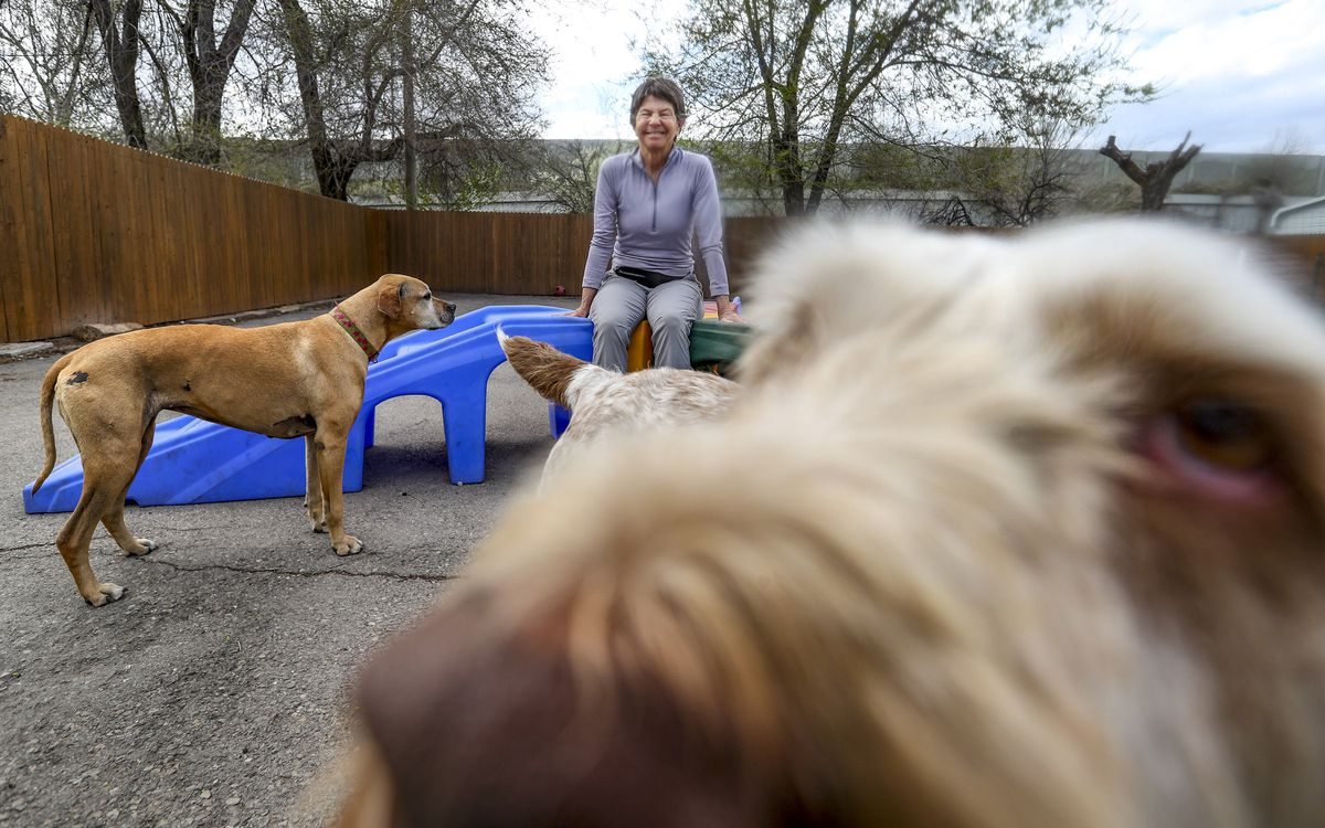 Suzie Ellison plays with her dogs at her business, Aarf Dogwalking and Pet Sitting, in Murray on Tuesday, April 7, 2020.
